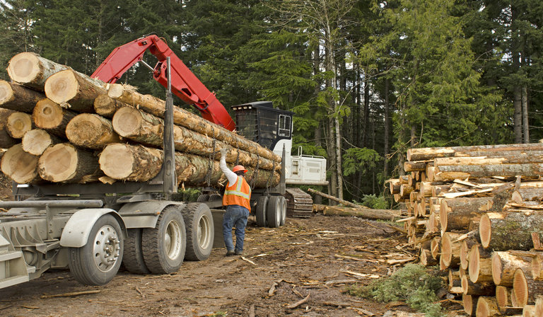 cutting through the competition with automated forestry